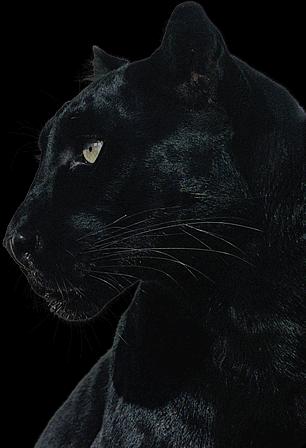 Wannsee Elektronik Panther